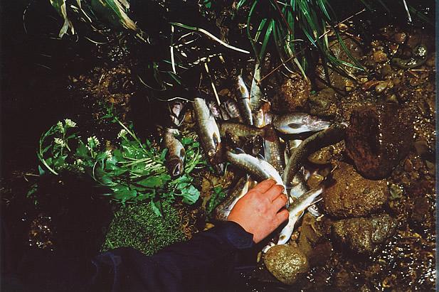 イワナが釣れる沢は生易しい所 ...