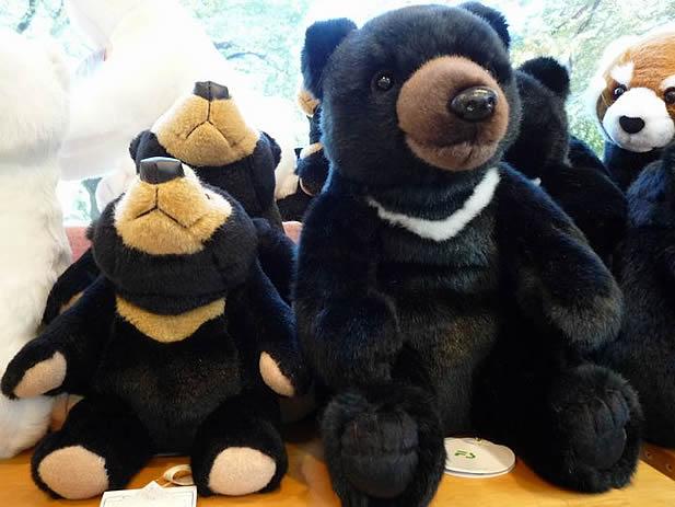 さすが上野動物園!ツキノワグマと比較販売されています。