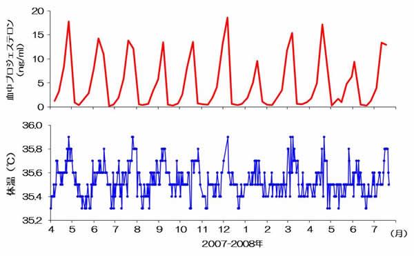 図2 名古屋港水族館のシャチ(クー)の血液中のプロジェステロンの分泌パターンと直腸温の変化の関係