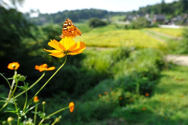 里山に囲まれた長閑な田園風景。これが日本の自然美であり心であると思うのは私だけだろうか。