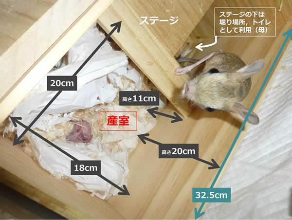 図2 オオミユビトビネズミの巣箱内の様子(天板を開けて上から撮影)