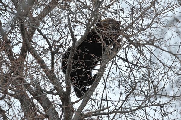 パキパキと、森を抜け、微かに聞こえる音を辿ると器用に細い枝を伝ってしおれたブドウをクマが食べていた。