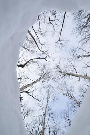 雪に残された、クマの足跡の底から広がる景色。