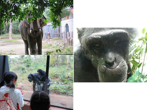 動物園では、動物たちが来園者と交流する風景をよく見かけます。