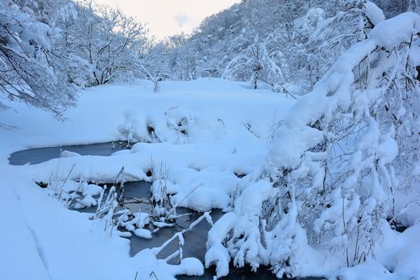 全身雪化粧と言った感じの冬の里山。夜明けの凛とした空気と静寂が神聖な空間を作り上げていた。夜、活発に活動していたであろう獣の気配など全く感じられない静けさがそこにはある。