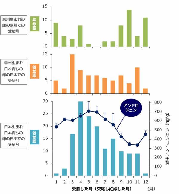 図1 国内飼育下コアラの繁殖状況の季節性(1986~2005年の集計結果) オーストラリアでの受胎時期と日本での受胎時期は逆転し(季節はだいたい同じ)、オーストラリア生まれで日本育ちの雌の日本での受胎時期は、その中間的なパターンを示しています。