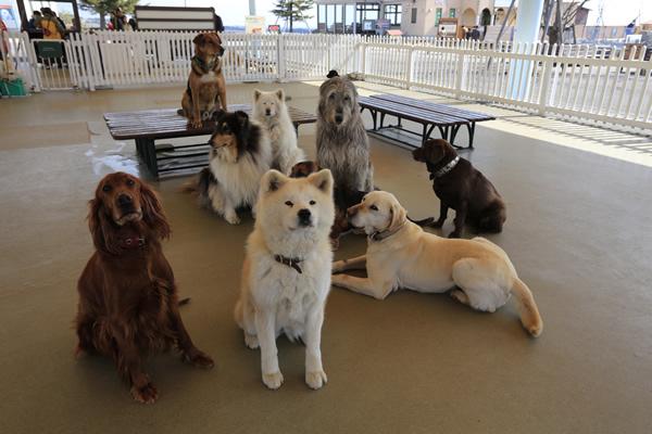 安心してふれあえる犬たち