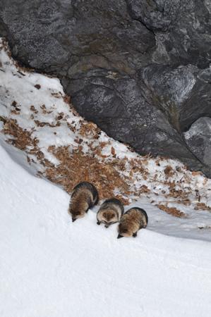 三匹が並んで雪壁を登る。