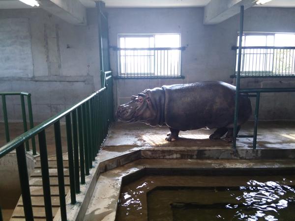 徳山動物園のマル