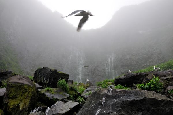 早朝、霧に包まれた断崖の滝に鳴き声が響く。