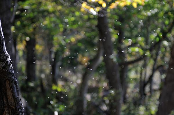 正午過ぎ、雪虫が飛び始めた。 まとまった降雪が数日中にあるはず。