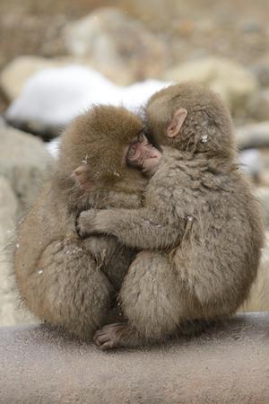 子ザル同士で抱き合う姿は愛らしい