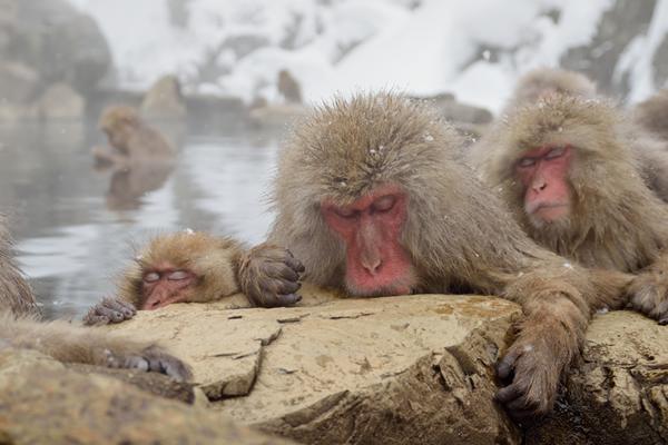 人も猿も同じ。やはり温泉が一番。