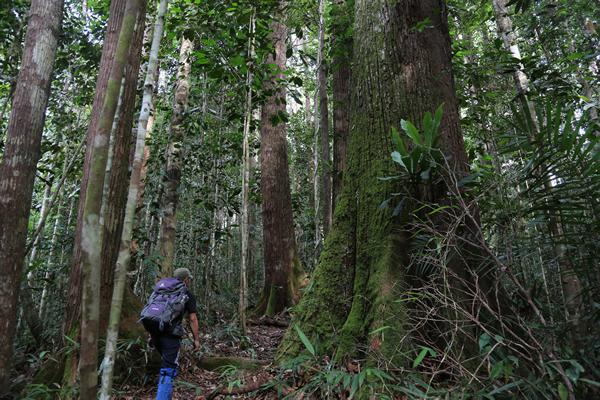 良い森林は動物が多くヒルも多い。