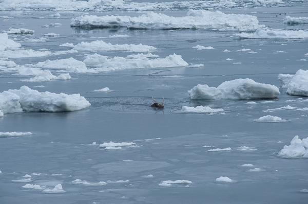 零下の海が全てを絶った。
