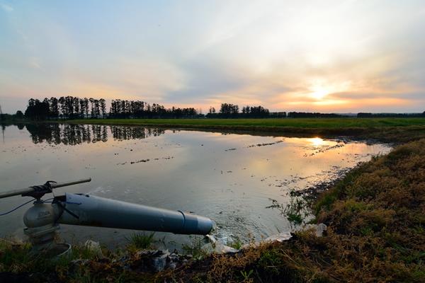 田に水を張り田植え後しばらくの間の季節、一番水田が美しく輝く。 冬の間休んでいた大地が目覚めて勢いよく動き出す躍動感さえ感じる。