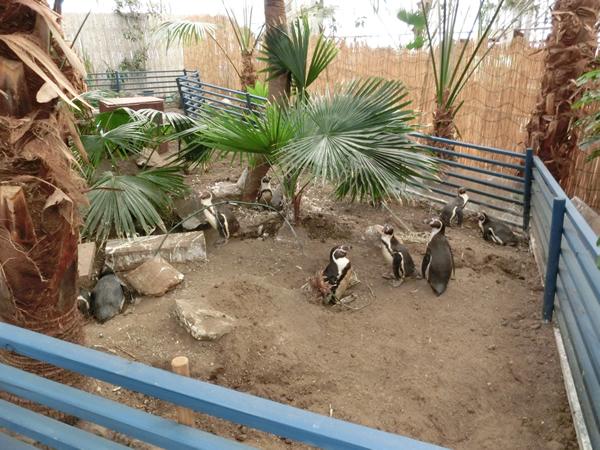 本物の土と木とペンギンたち