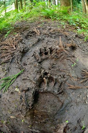 また、大きな熊の足跡もあった。里山で暮らす人が減少し管理の手が入りにくくなることで、里山の重要な機能(動物と人との境界)を失い、これら森のいきものが人里に出てきやすくなる。最近取りざたされるクマやイノシシなどとの無用な衝突を避けるためにも里山が荒れ地になることなく管理されることが重要なのだと実感した。