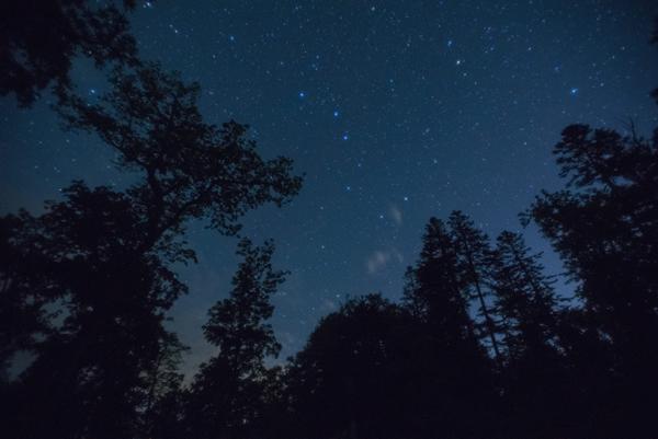 クマゲラの眠る森に、北斗七星が舞う。