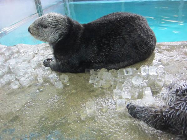 リロ「最近、氷いっぱいもらえるね♪」